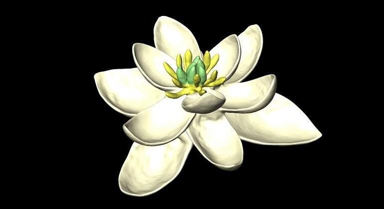 Modelo-flor