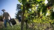 El-sector-del-vino-en-Europa-europa-press.jpg