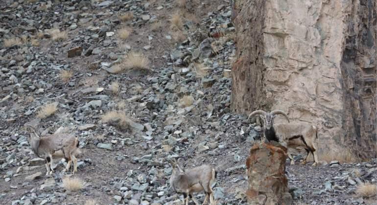 En esta fotografía hay un leopardo y antes de que te des cuenta, ya te ha mordido