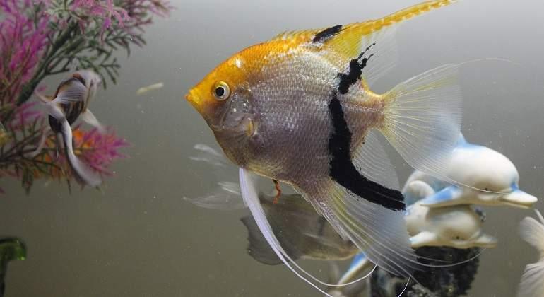 Colocar bien el acuario en casa crucial para que no se - Acuario en casa ...