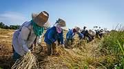 Mujeres-area-rural.jpg