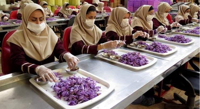 En la fábrica extraen los estigmas de la flor del azafrán y los secan para su uso y comercialización