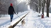 Una-persona-paseando-a-su-perro-por-un-camino-nevado-iStock.jpg