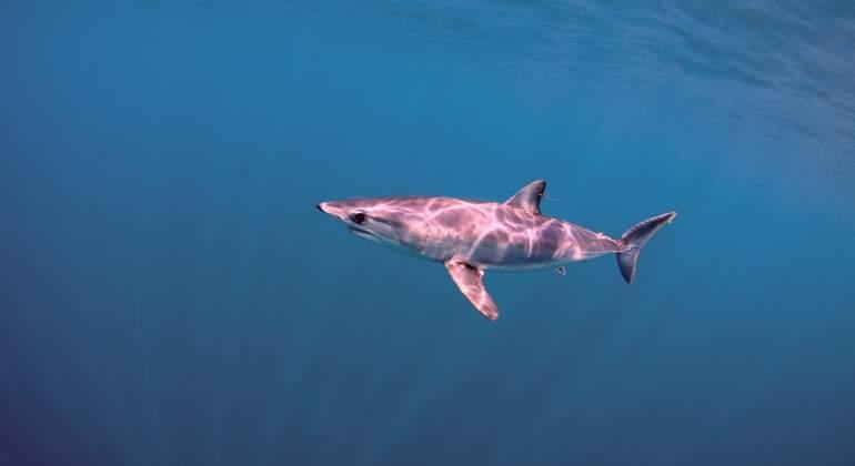 tiburon-mako-dreams.jpg