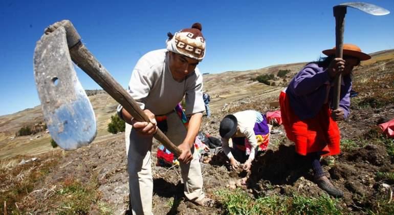 Pobreza rural de la Sierra Norte y Sur del Perú desciende en 22% y 12% -  eleconomistaamerica.pe
