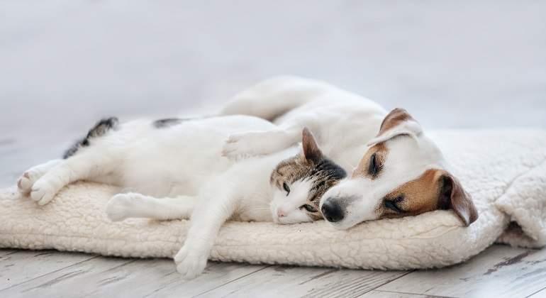 Gato-y-perro-durmiendo-juntos.jpg
