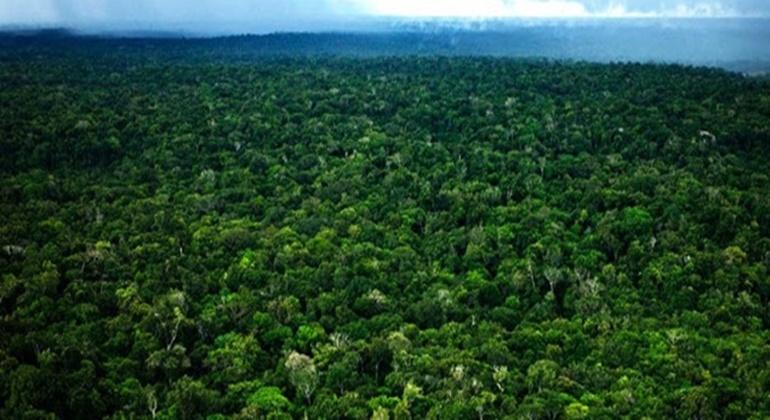 selva amazonia