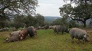 cerdo-iberico-2.jpg