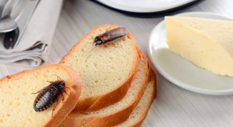 cucarachas.cocina-dreamsitme.jpg