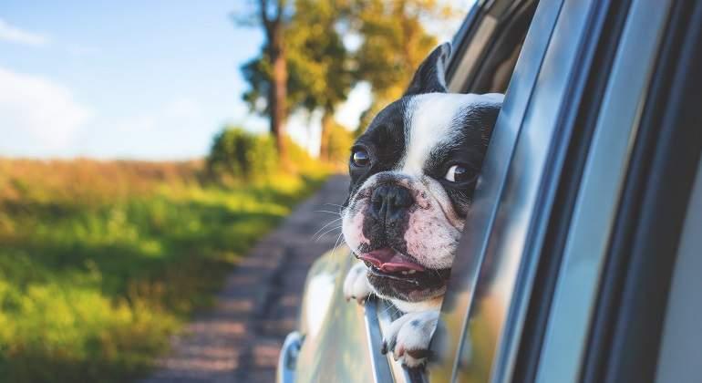Consejos  para viajar con tu mascota seguro y sin imprevistos