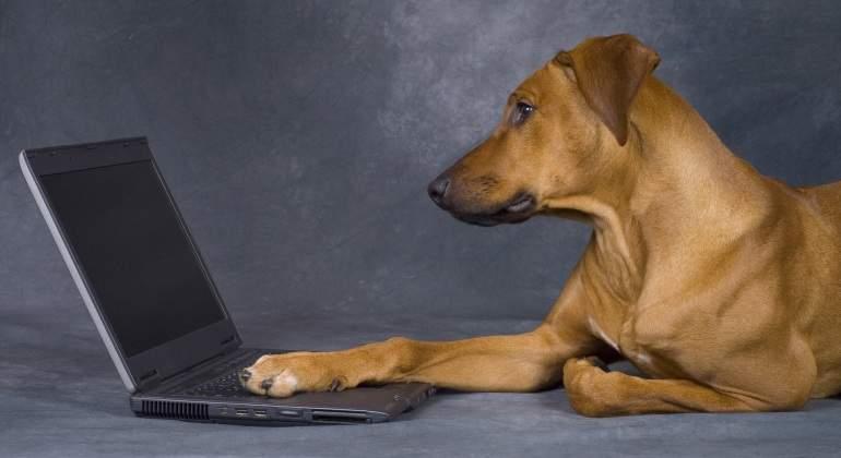perro-ordenador-dreamstime.jpg