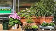 plantas-exterior-770.jpg
