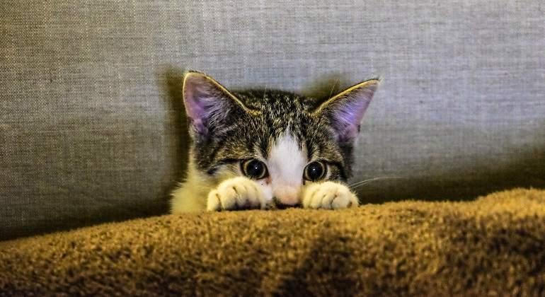 Los gatos celebran hoy su Día Internacional