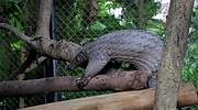pangolin-coronavirus-getty.jpg