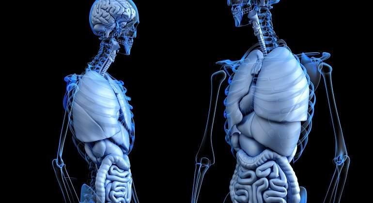 Descubren un nuevo órgano en el cuerpo humano y es el más grande ...