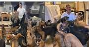da-hogar-a-perros-huracan-delta-fb.jpg