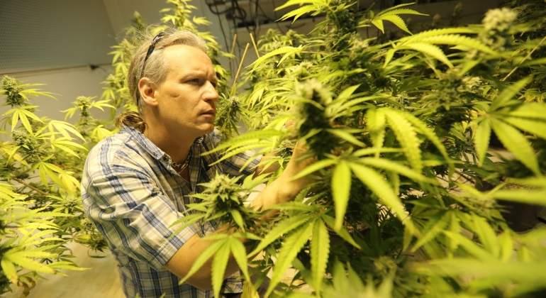 plantacion-marihuana-droja-canada-bloomberg-770x420.jpg