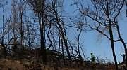 Australia-incendios-5-reuters.jpg
