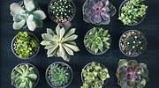 suculentas-plantas-1.jpg