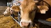 vacas-granja-dreamstime.jpg