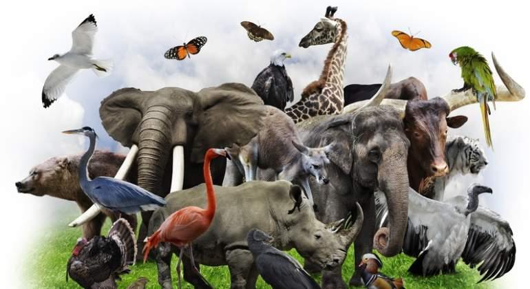 animales-dreamstime.jpg