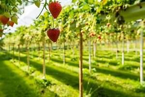 La revolución agrícola holandesa