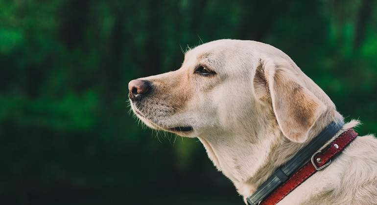 limpiar perra coito cerca de madrid