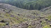 OHLA impulsa la recuperación de espacios naturales y la lucha contra el cambio climático