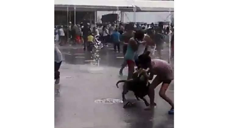 Perro pitbull ataca a niña mientras jugaba con agua de una fuente