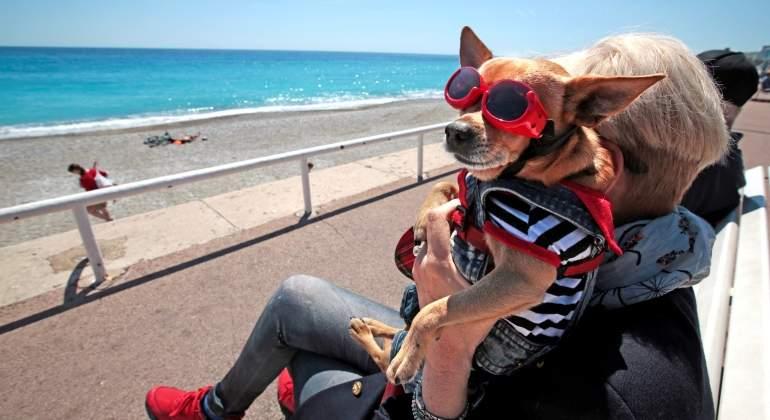 calor-playa-perro-reuters.jpg