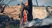 IncendioArbol770.jpg