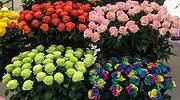 Con 5.700 millones de unidades Colombia es el segundo exportador mundial de flores