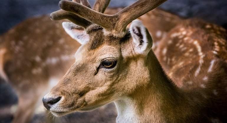 Animales Que Gozan De Tu Simpatía Y Son Más Peligrosos Que Los
