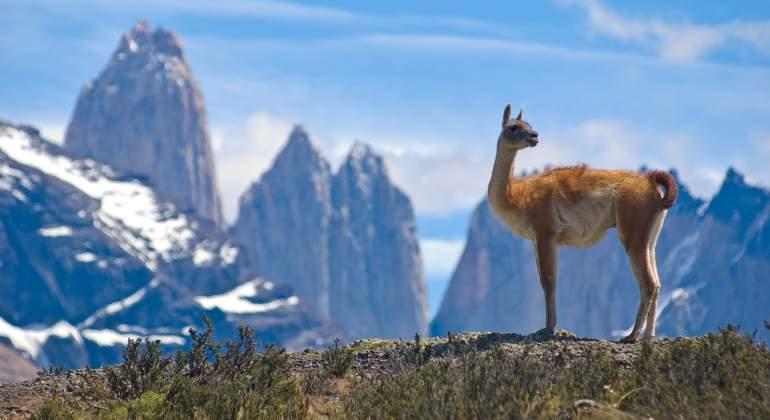 chile_guanaco_patagonia_770_dreamstime.jpg