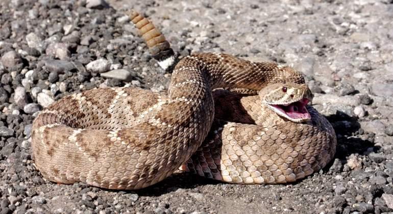 Resultado de imagen de Serpiente venenosa mordiando a Pablo Iglesias