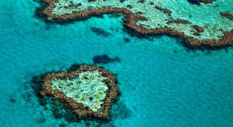 La gran esperanza científica para salvar los arrecifes de coral