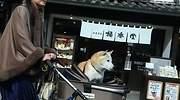 japon-perro-letrero-dreams.jpg