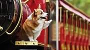 Los-perros-pueden-ser-diestros-o-zurdos.jpg