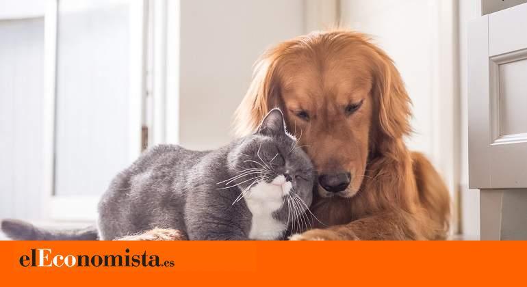 ¿Gatos o perros? Este mapa revela cuál es la mascota preferida en el mundo