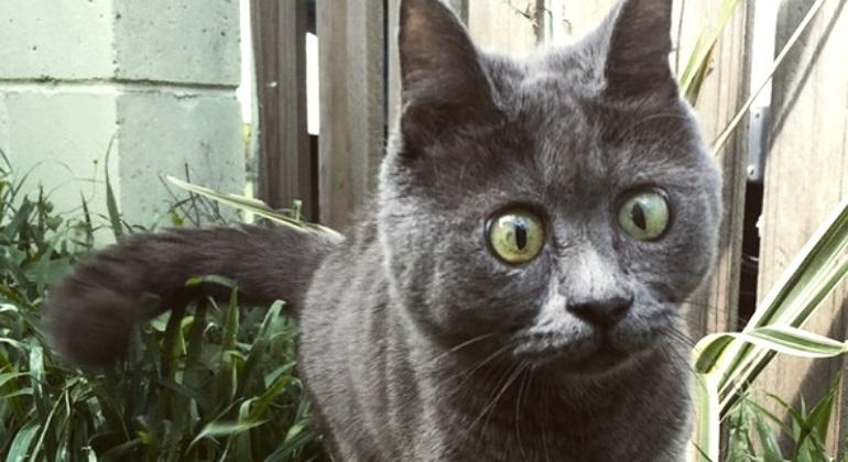 gato-kevin-ig.jpg