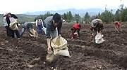 agricultura770.jpg