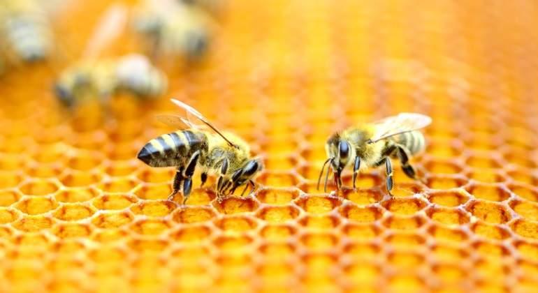 abejas-enjambre.jpg