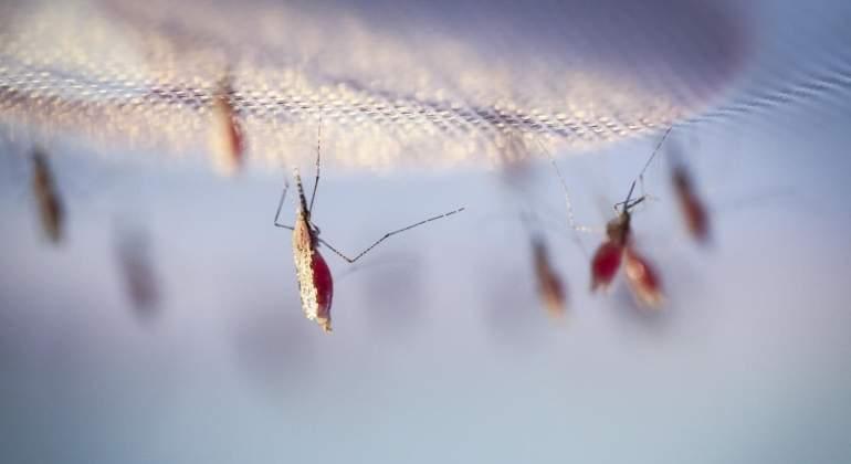 mosquito-ep.jpg