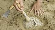 Una-persona-limpiando-la-arena-sobre-una-calavera-iStock.jpg
