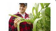 agricultura-granja-archivo.png
