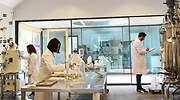 Hifas busca en las setas la fórmula del éxito en el sector farmacéutico