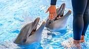 Unos-delfines-en-el-agua-con-su-cuidador-iStock.jpg