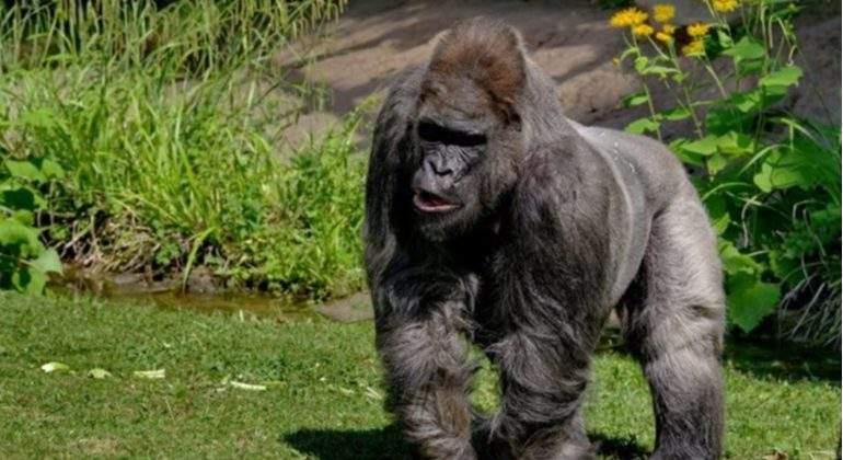 fritz-gorila.-mas-viejo-europa-zoo-munich-muerte-epress.jpg