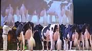 La ruina de la leche: los ganaderos pierden 1.250 euros al mes por producirla