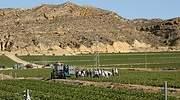 agricultura-espana.jpg